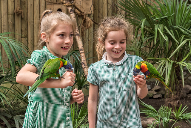 animal feeding lorikeets