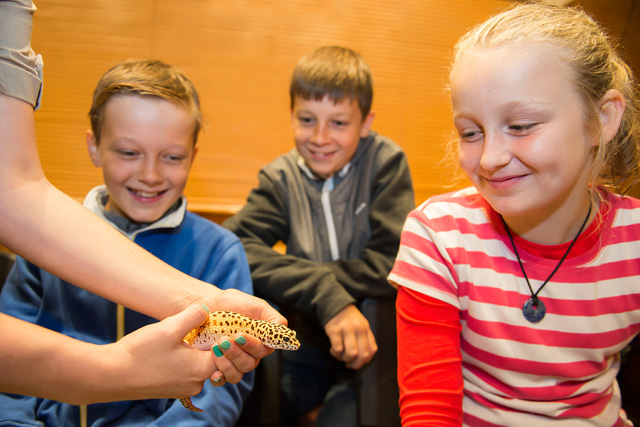 discovery sessions reptiles